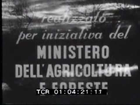 Istituto Luce La bonifica del tavoliere delle Puglie, Foggia