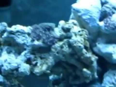 Reef tank update day 13