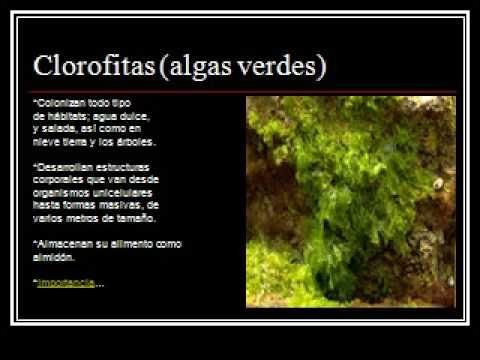 Reino Plantae :)