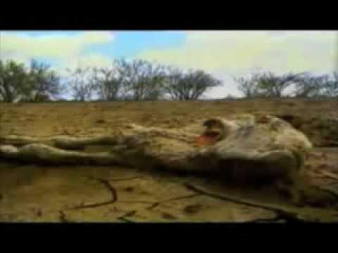 Crisis mundial y consumo de animales