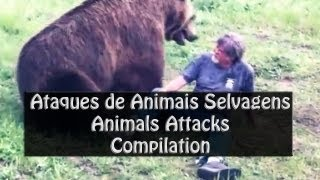Ataques furiosos de animais selvagens  Animals Attack Compilation