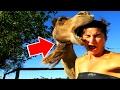 ВЕРБЛЮДЫ. 10 интересных фактов про них, купите верблюда