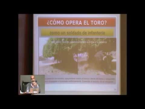 CARACTERÍSTICAS DE LAS RESES: ¿CÓMO DEBE SER EL TORO DEL FESTEJO TAURINO POPULAR-TRADICIONAL?.