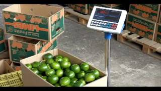 Preparación de Limón Tahití para exportación