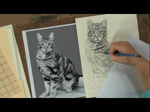 Keys to Drawing Realistic Animals with Claudia Nice