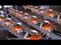 How to Harvesting Crab - Amazing Crab Factory - Crab Meat Processing Line