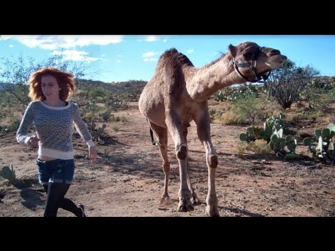 Girl vs. Camel (in race!)