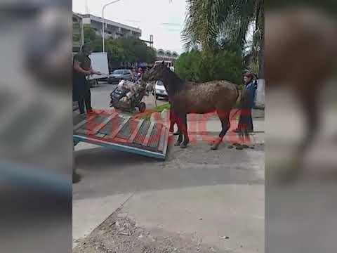 Rescataron un caballo