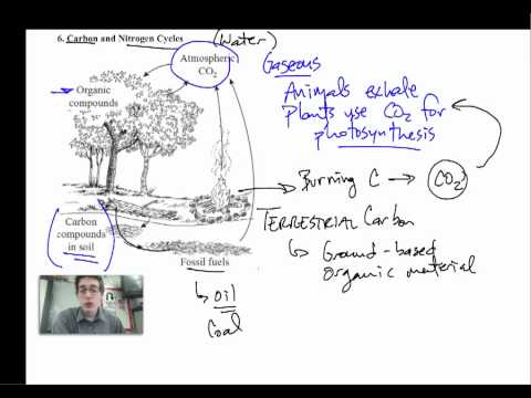 Ecology 4 - Carbon and Nitrogen Cycles