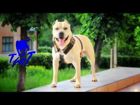 Super pas TreT – stvarno čudo od psa