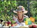 Фрагмент с середины видео Рецепты деликатесов из яблок. Удачные заметки