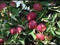 Рецепты деликатесов из яблок. Удачные заметки