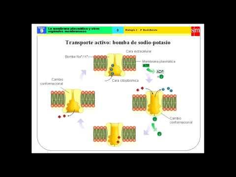 Biologia - Célula - Membrana plasmática y orgánulos membranosos - parte 1