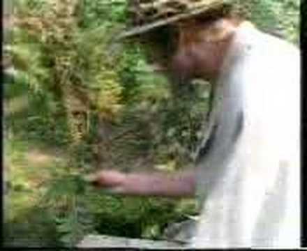 Mosquito Hunting - Monty python