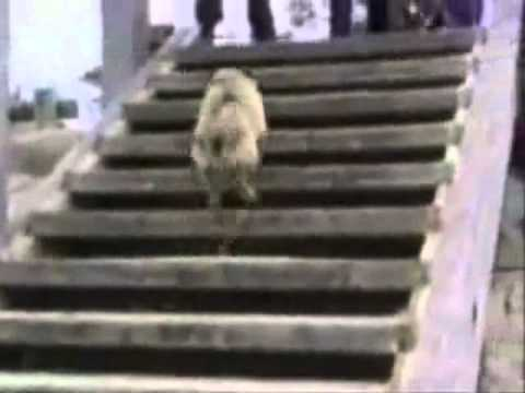 Try not to laugh. Best Animals Fail &amp; Wins Compilation Ever !! Funny Hahahah !!
