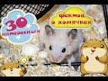 30 интересных фактов о хомячках | Всё о хомяках | Правильное содержание и питание хомяков 🍎