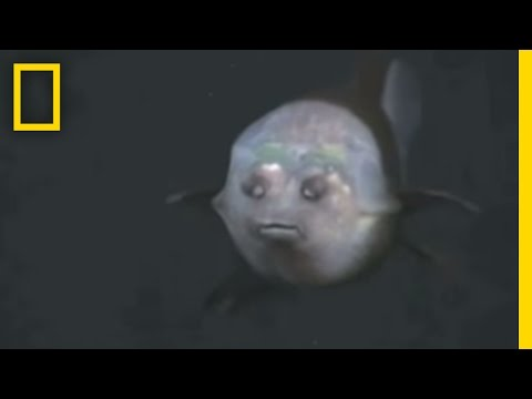 Fish With Transparent Head Filmed