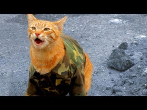 Behind the Scenes - Medal of Honor Cat