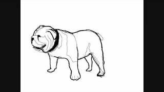 Hunde Zeichnungen Bulldog Online Zeichnen Lernen Youtube