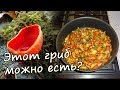 🍄 ГРИБ САРКОСЦИФА - где собирать, как готовить. Первые весенние грибы
