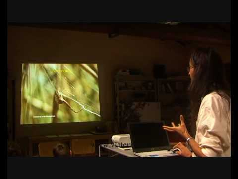ARACNO NIGHT. Scoprire i ragni al Museo di Scienze Naturali di Cesena