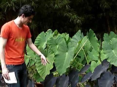 Recorrido plantas (2) - Parque La Presidenta. El Poblado