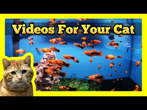 misc youtube videos for cats 480x360
