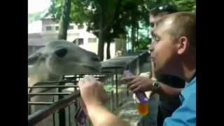 [Epic Fail Compilation Fun June 2013]