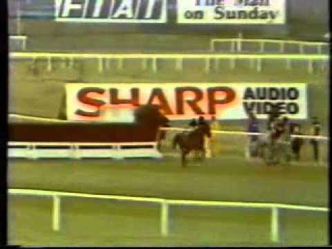 Horse Racing 1985 Whitbread Gold Label Cup Chase Wayward Lad