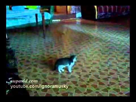 Kočičí horor :-O