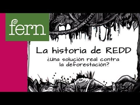 La historia de REDD