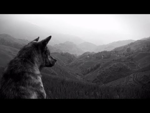 The Joy Formidable - Wolf's Law [Official Video]