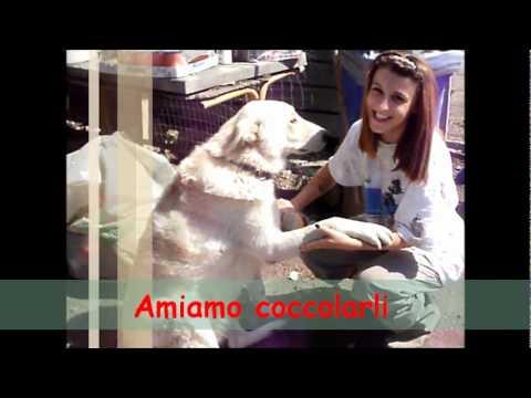 Associazione Leda (Lega per la Difesa ed i Diritti Animali ed Ambiente)