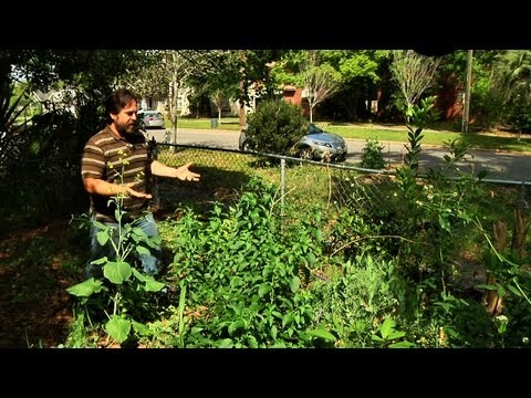 Permaculture Paradise at Alex's Front Yard Garden!
