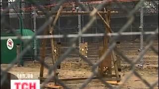 В Житомирский мини-заповедник перевезли медведя Настю