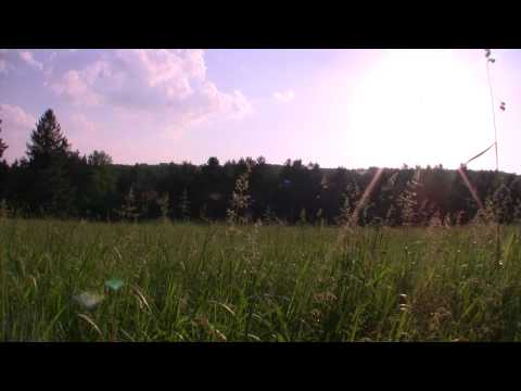 Peaceful Meadow  DreamScene Video Screen Saver & Desktop