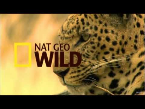 Nat Geo Wild HD New Advert 1080p 2012