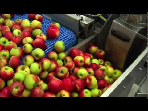CIDRICOLE : Pressoir à pomme OPUS 30