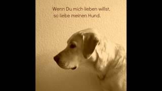 Zum Hunde Nachdenken Über Sprüche