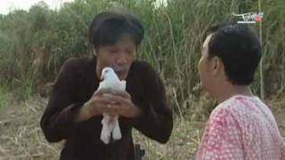 Hai kich - Luat 5 cu dam - Tieu pham hai Vietnam