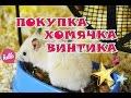 Покупка хомячка Винтика и подготовка к его появлению дома