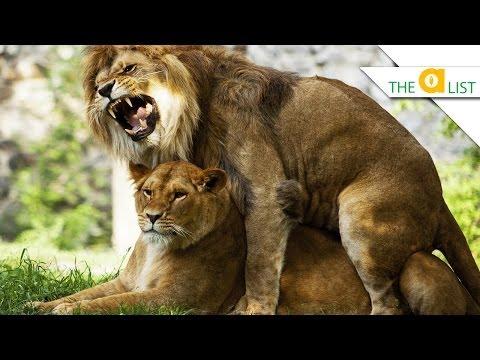 5 Animals That Have Killer Sex