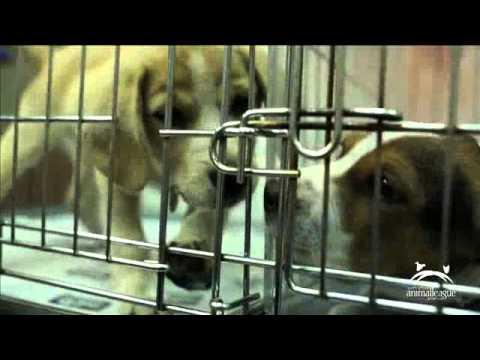 Pet Adoptathon PSA