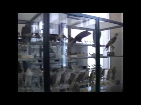 Museo civico di zoologia di Roma e Bioparco