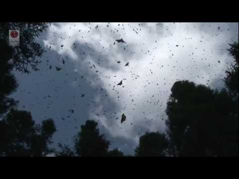 CONABIO Historia de la Migracion de la Mariposa Monarca