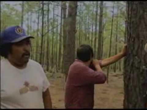 Problematica Actual del Bosque CHIHUAHUA MEXICO