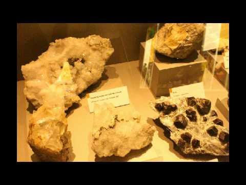 Es.Ser.Ci Museo Tridentino di Scienze Naturali 2010/2011