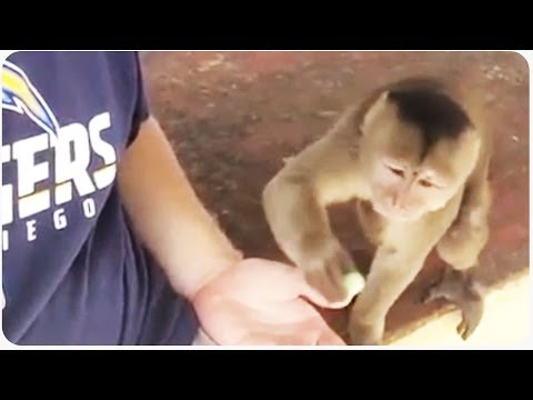 Trying to feed too hungry monkey