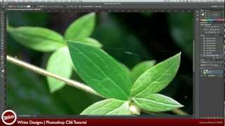 Photoshop CS6: Pen Tool Tutorial