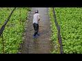 Фрагмент с середины видео Daio Wasabi Farm - Nagano - 大王わさび農場 - 4K Ultra HD